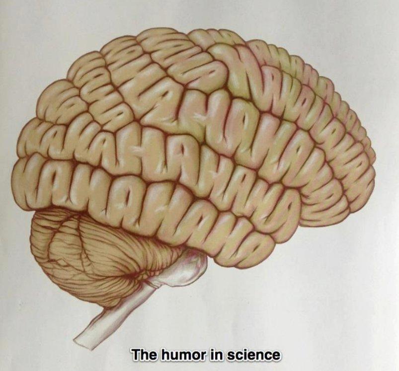 ha-ha-brain-cap